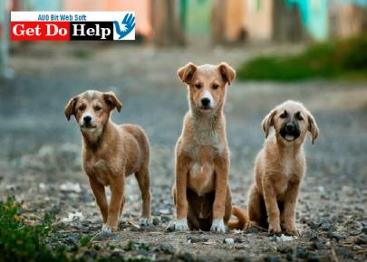 How to Help Animals? - Everything You Want to Know